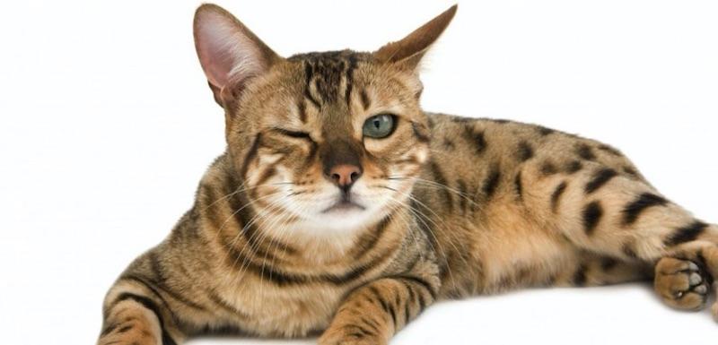 peau de chat et électricité statique